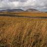 trawy Connemara Irlandia